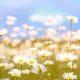 Offerte Ponti di Primavera a Bellaria